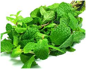 peppermint_tummy flattening foods