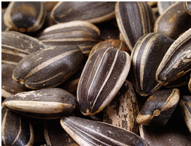 sunflower seeds_flat belly
