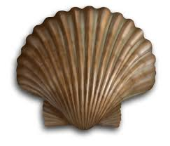 scallops superfood benefits