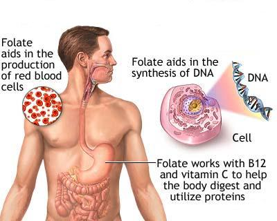 folic acid deficiency anaemia