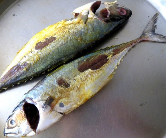 Mackerel Fish Images