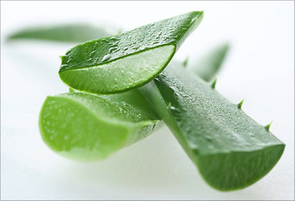 aloe_vera health benefits