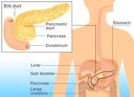The Impact of Excess Weight On Vital Body Organs pancreas