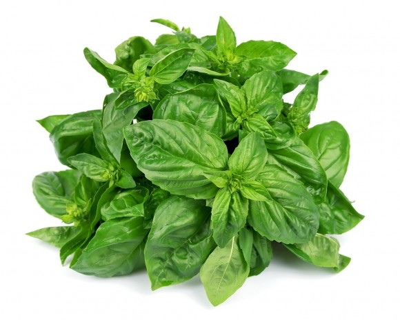 pain killer Basil