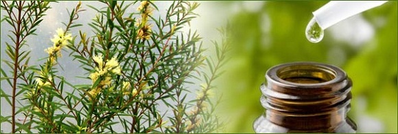 Top 5 Amazing benefits of Tea Tree Essential Oil for skin health