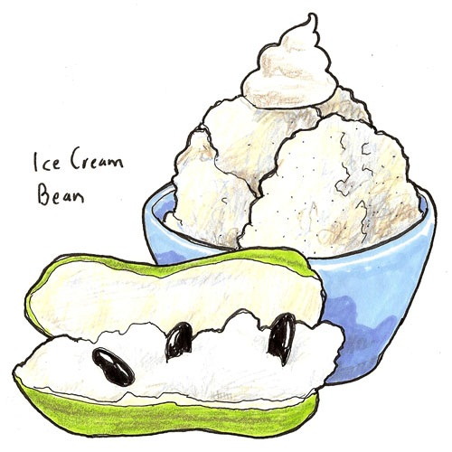Health Benefits Of Ice Cream Bean Fruit
