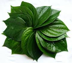 betel leaves for weight loss