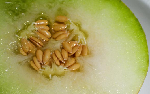 Galia melon health benefits 2