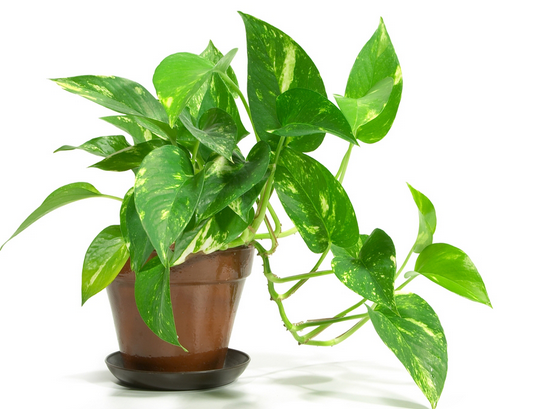 how beneficial are houseplants 2