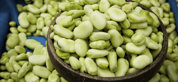 Fava beans health benefits