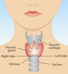 diet for thyroid