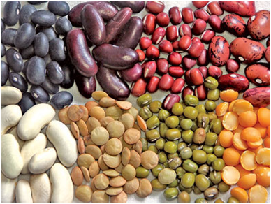 lentils and beans in large quantities