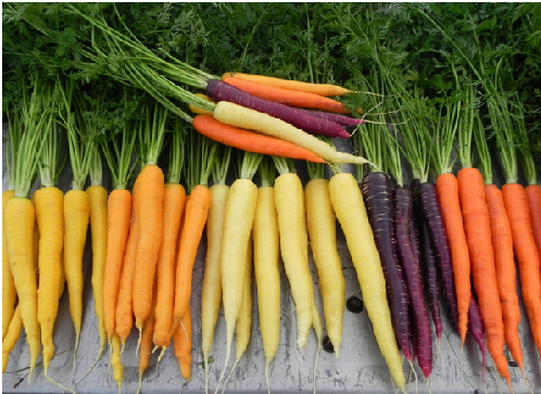 Superfood: Health Benefits of Carrots