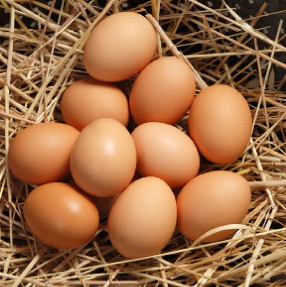 eggs nutritious weight loss