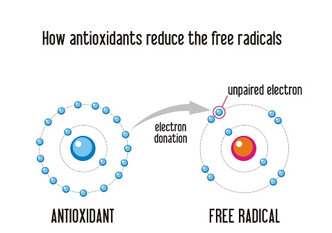How Antioxidants Work On Free Radicals Damage