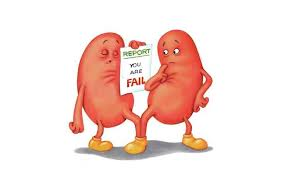 The Impact of Excess Weight On Vital Body Organs kidney