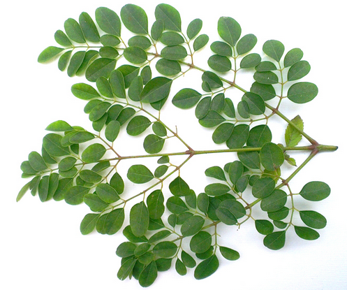 Drumstick leaves- Top health and weightloss benefits of drumstick