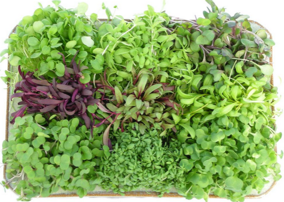 Nutritional Benefits Of Microgreens