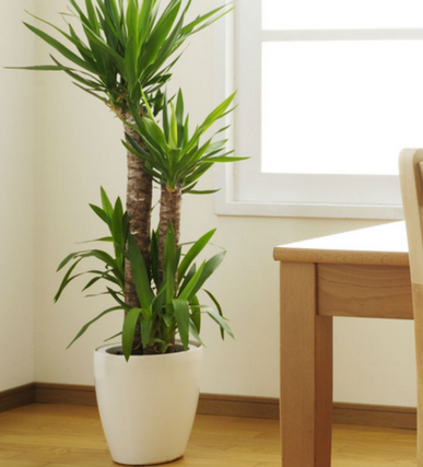 how beneficial are houseplants