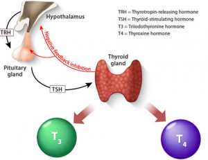 Healthy thyroid tips