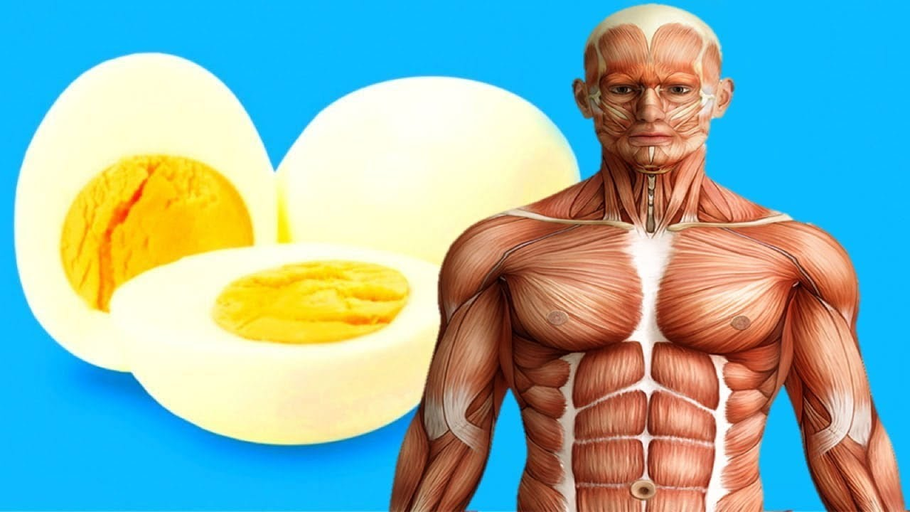 7 health benefits of eating Eggs in the Morning